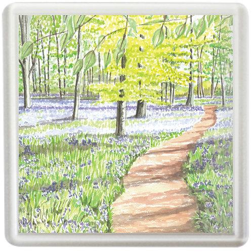 Bluebell Wood Study 1 - Coaster