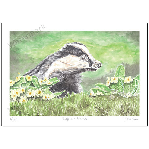Badger and Primroses, Print A4
