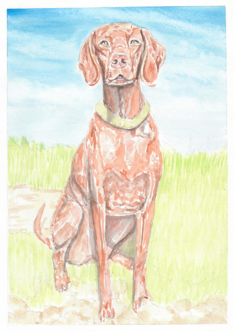 Dog Portrait 11