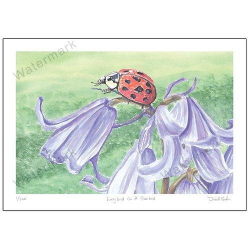 Ladybird On A Bluebell, Print A4 or A3
