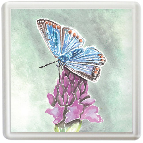 Common Blue Butterfly - Coaster