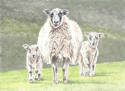 Mother Sheep with Spring Lambs