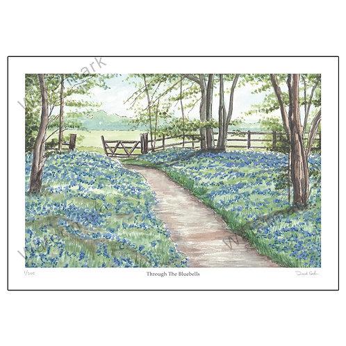 Through The Bluebells, Print A4 or A3