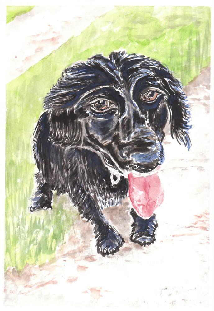 Dog Portrait 12