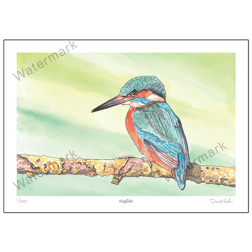 Kingfisher, Print A4 or A3