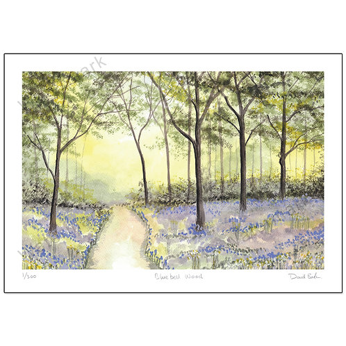 Bluebell Wood Study 3  Print A4 or A3