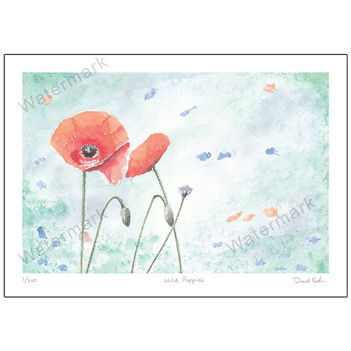Wild Poppies,  Print A4 or A3