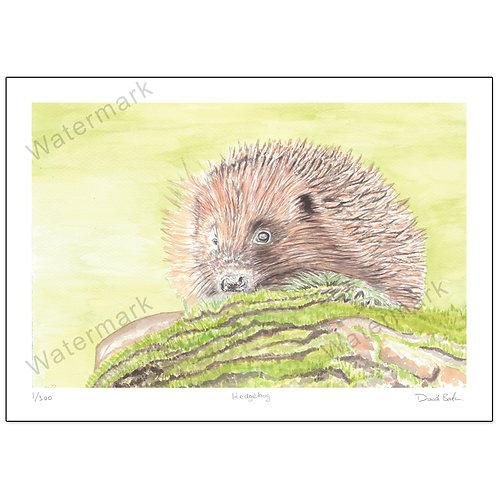 Hedgehog, Print A4