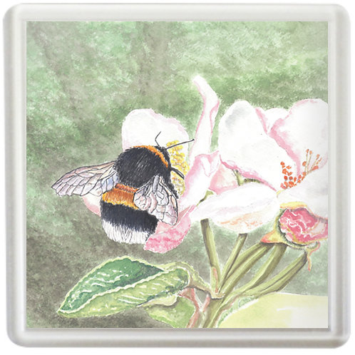 Bumble Bee On Rose Blossom - Coaster
