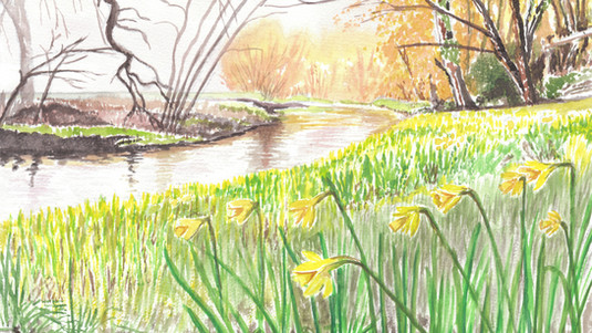 Daffodils Beside The Riverbank