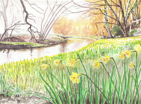 Daffodils Beside The Riverbank
