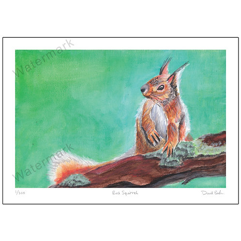 Red Squirrel In Acrylics, Limited Edition Print A4 or A3