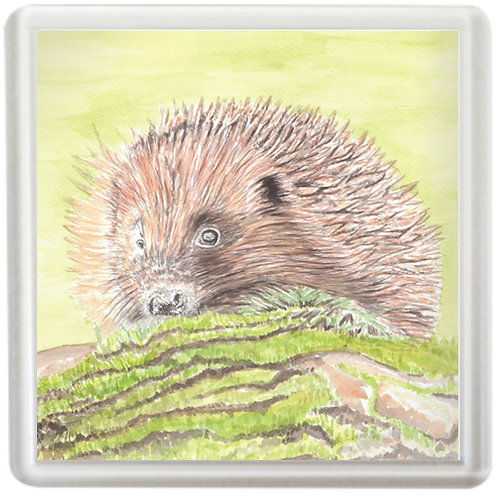 Hedgehog - Coaster