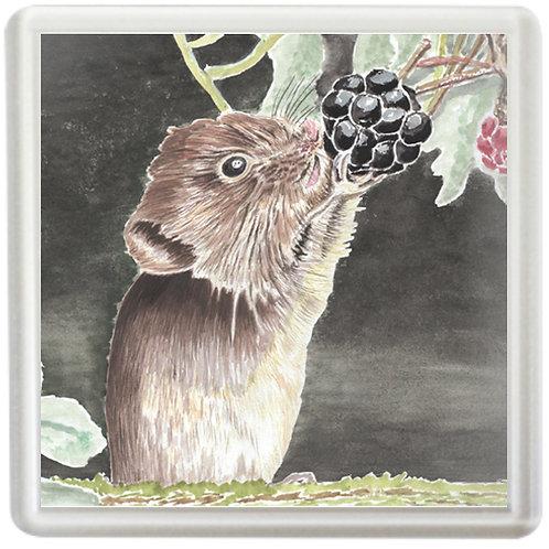Bank Vole Eating Blackberry - Coaster
