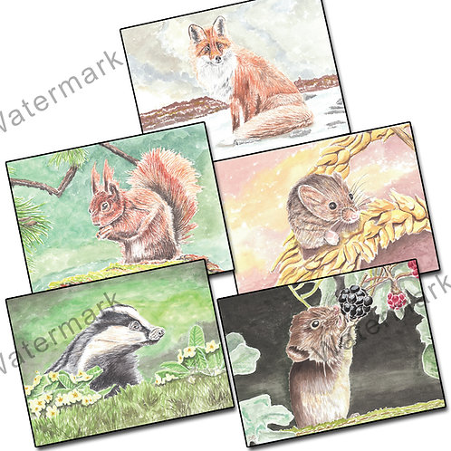 Wildlife - Pack 5 of Greetings Card Landscape, A6