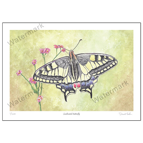 Swallowtail Butterfly, Print A4 or A3