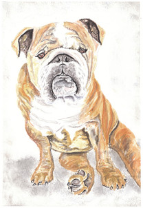 Dog Portrait Bulldog