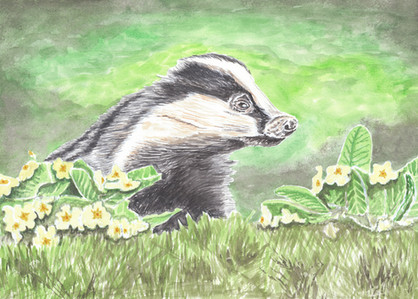 Badger and Primroses