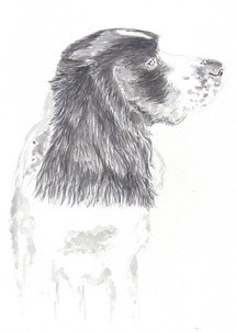 Dog Portrait 8