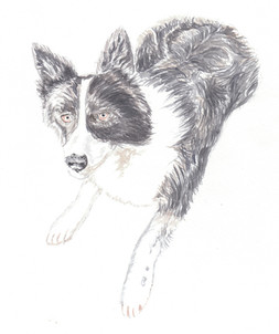 Dog Portrait 6