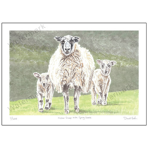 Mother Sheep with Spring Lambs, Print A4