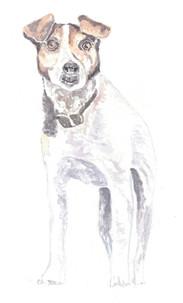 Dog Portrait 4