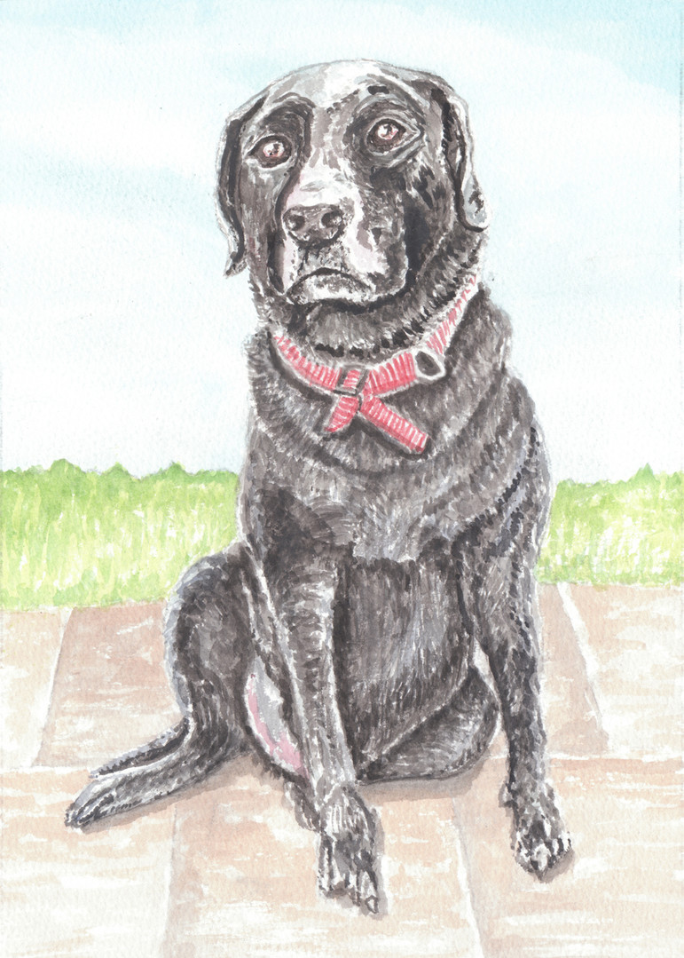 Dog Portrait 9