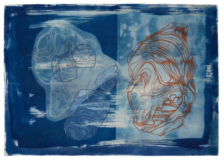 Cyanotype and screenprint on fabriano paper 70 x 50cm