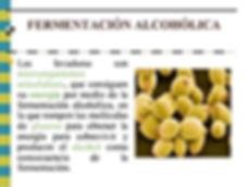 tema-2-fermentacin-alcohlica-3-638.jpg