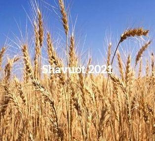 Banner Shavuot pic1.JPG