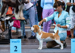 Best of breed at international show, St.