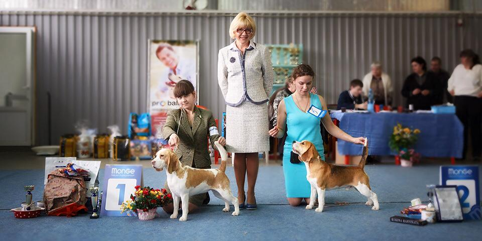 Best of breed speciality, Saratov