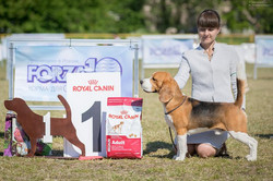 Beagle Party - 2017 Best of Breed - Lion