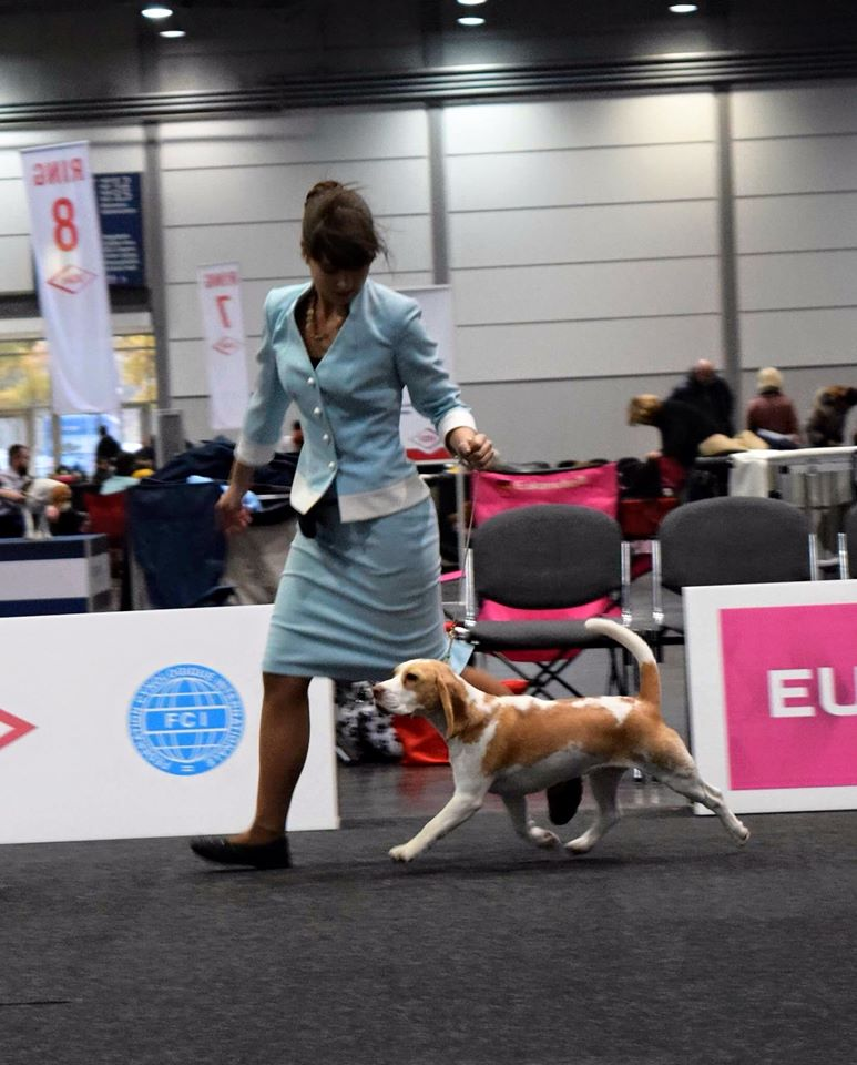 Germany, World dog show - 2017