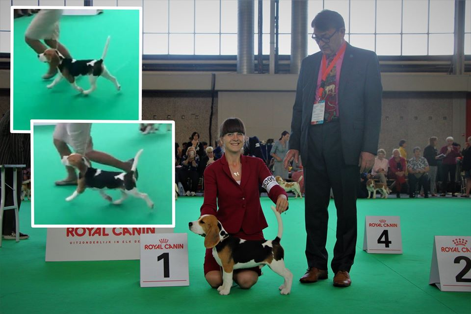 Best baby of breed, World dog show - 201