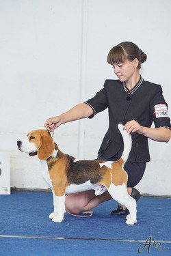 European dog show - 2019, excellent 3 in