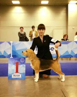 Champion of Eurasia-2017