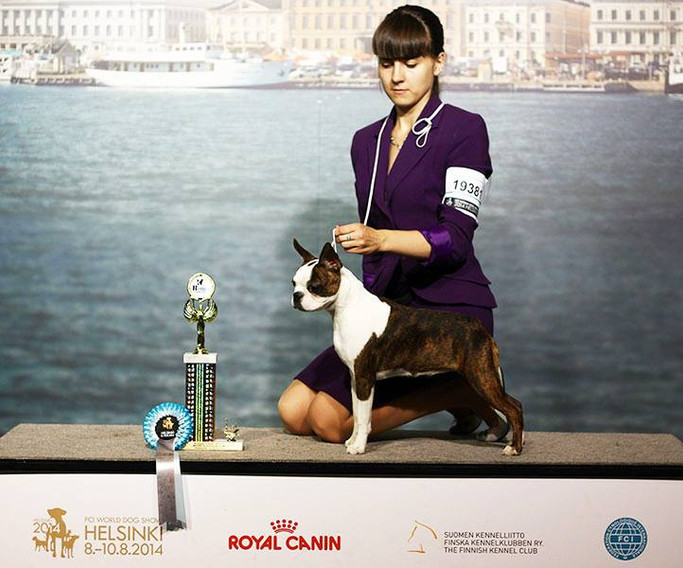 WDS 2014 BOS Puppy