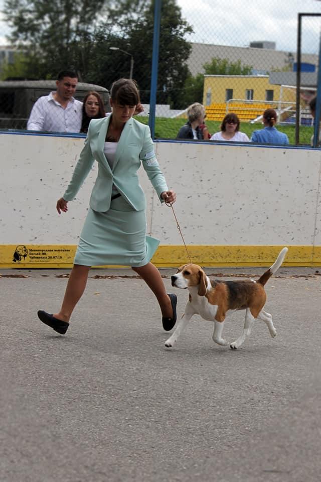 Beagle speciality 2019