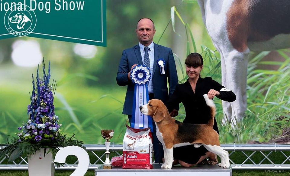International dog show Tallin
