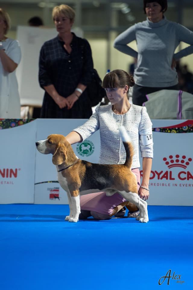 European dog show - 2018