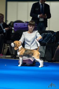 European dog show 2018 stack