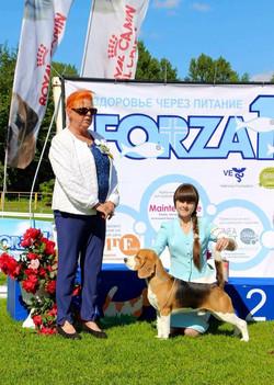 Beagle speciality, Saint-Petersburg