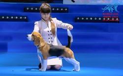 World dog show - 2016