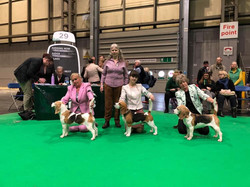 Best Puppy, Crufts - 2019