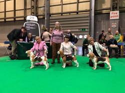 Best Puppy, Crufts - 2019