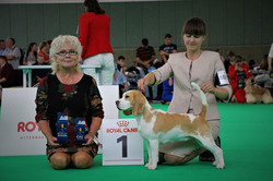 CACIB, BOS and Benelux Winner-2018, Amst