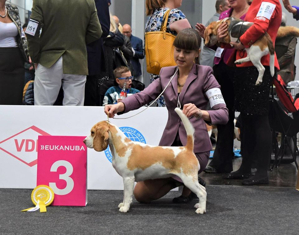 Excellent 3 in Junior class, World dog s