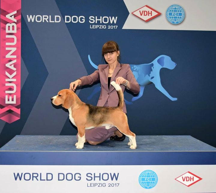 World dog show 2017, excellent in junior class