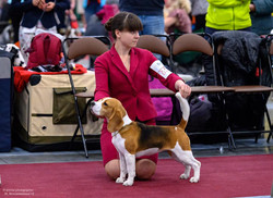 First Best of Breed at International sho